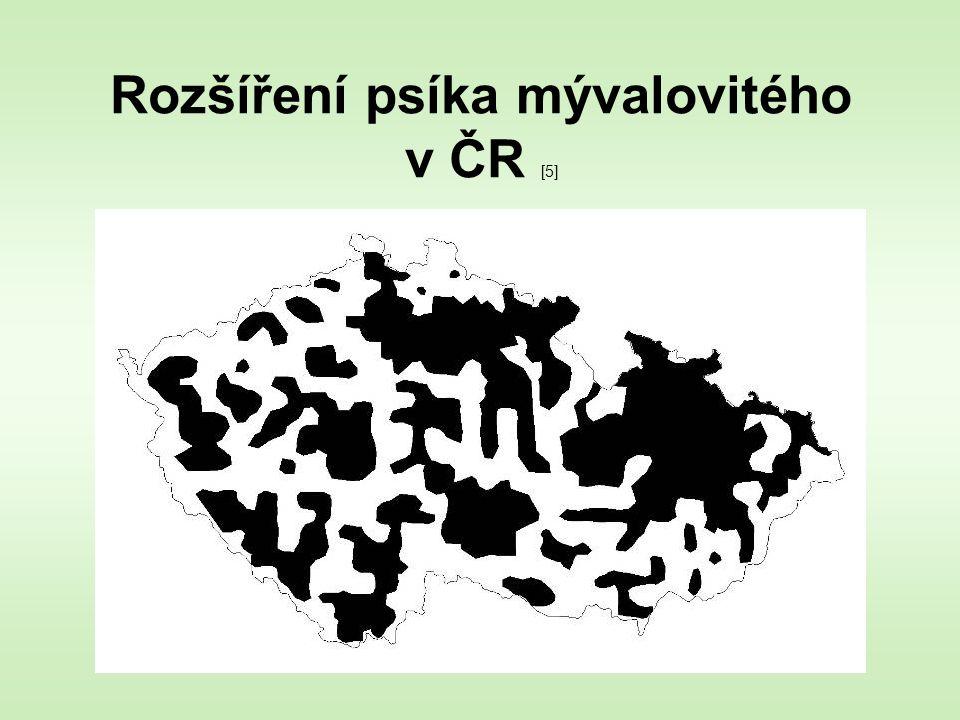 Rozšíření psíka mývalovitého v ČR [5]